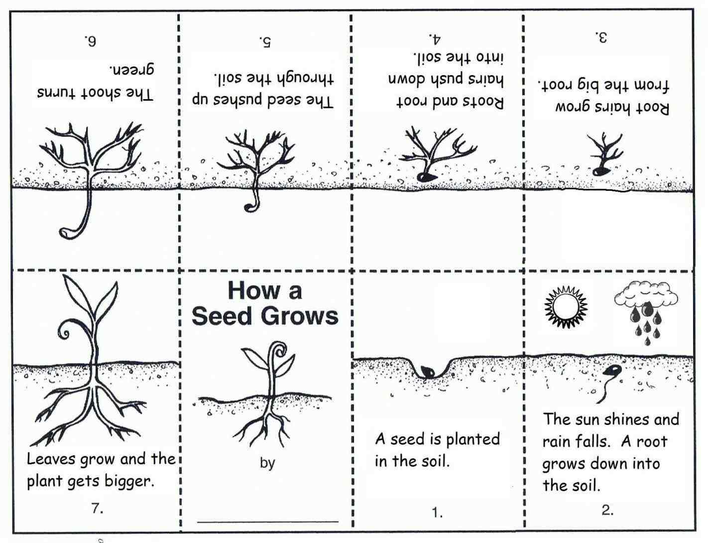 Plant Worksheets 2nd Grade