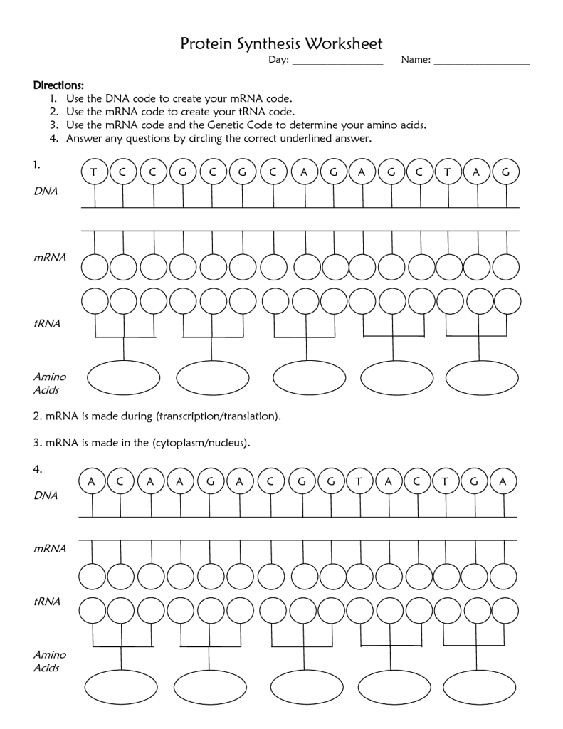 Protein Synthesis Worksheet Answers The Best Worksheets Image