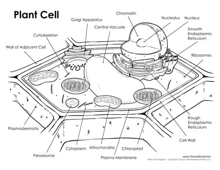 28+ Collection Of Cell Drawing Worksheet