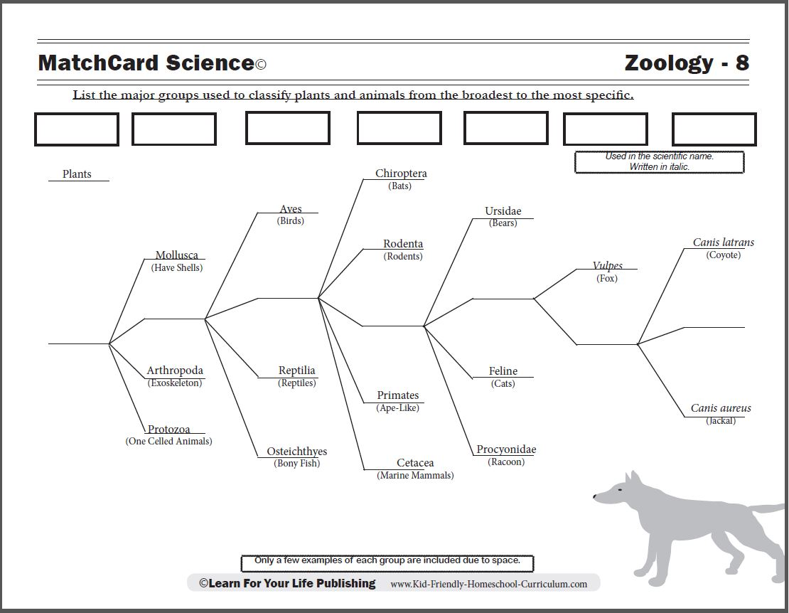 Animal Classification Worksheets Worksheets – Worksheets Samples
