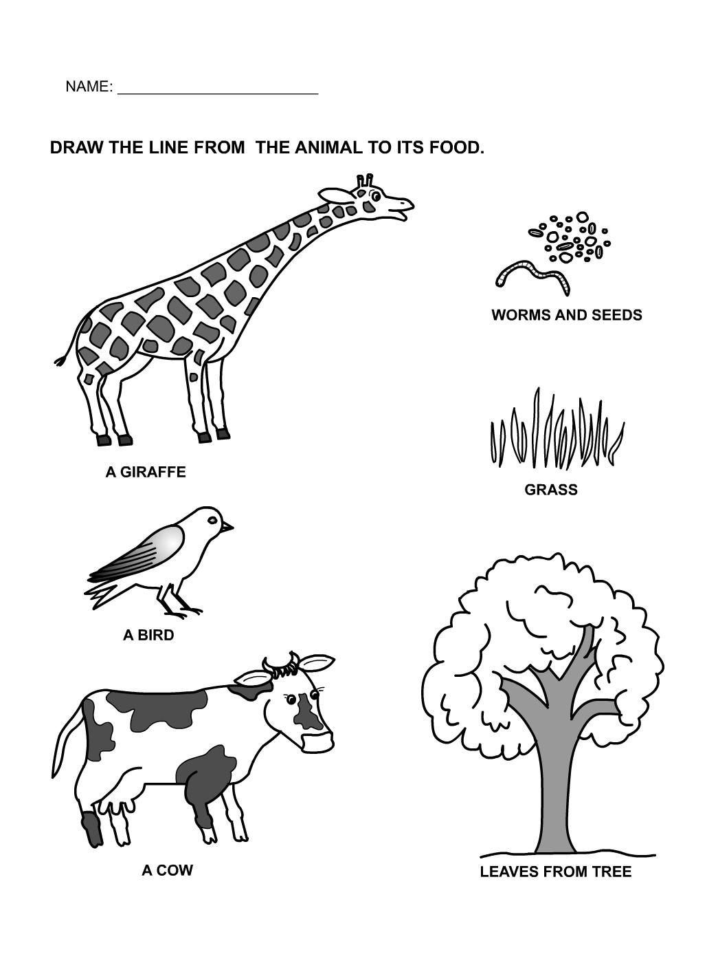Animal Needs Worksheets For Kindergarten 243160