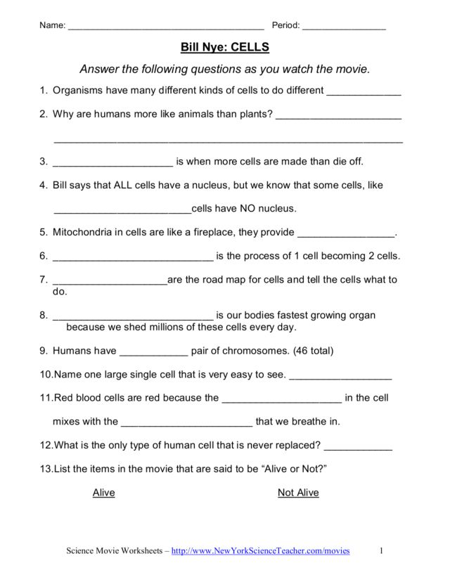 Bill Nye Cells Worksheet Image Collections