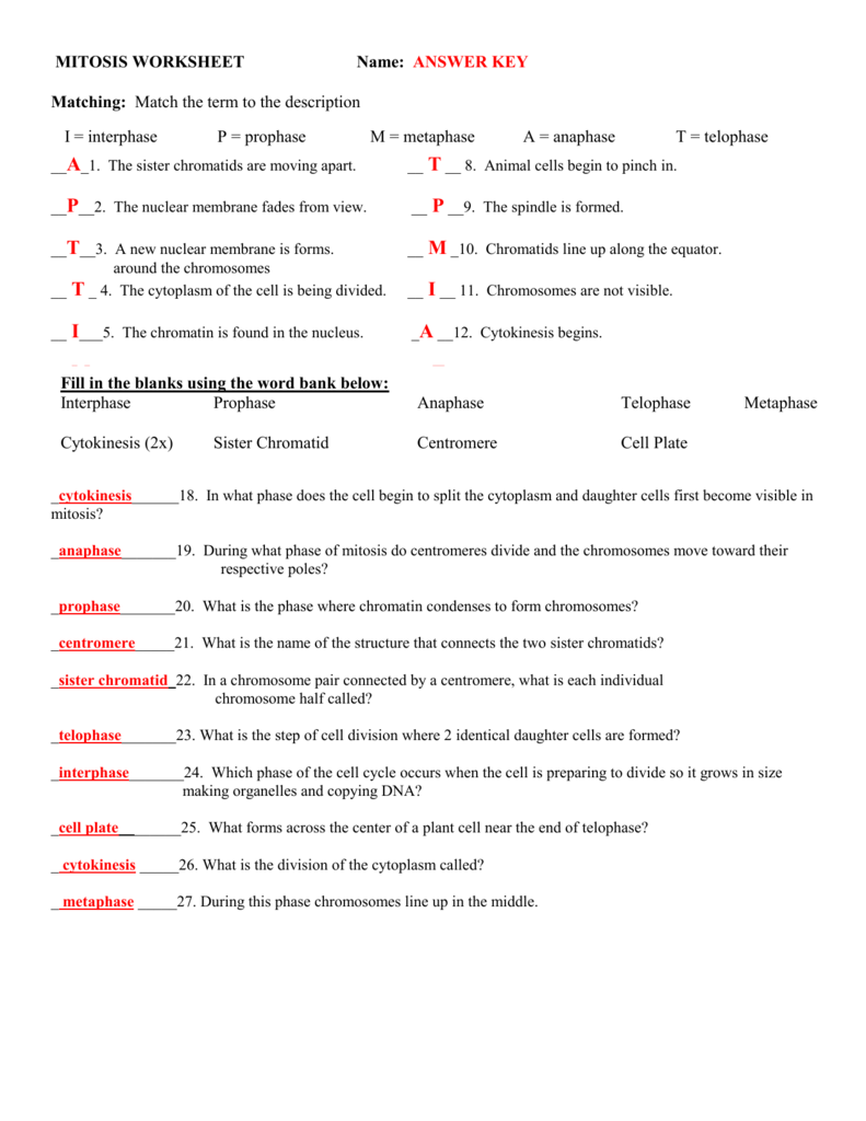 Cell Division Worksheet Matching 824519