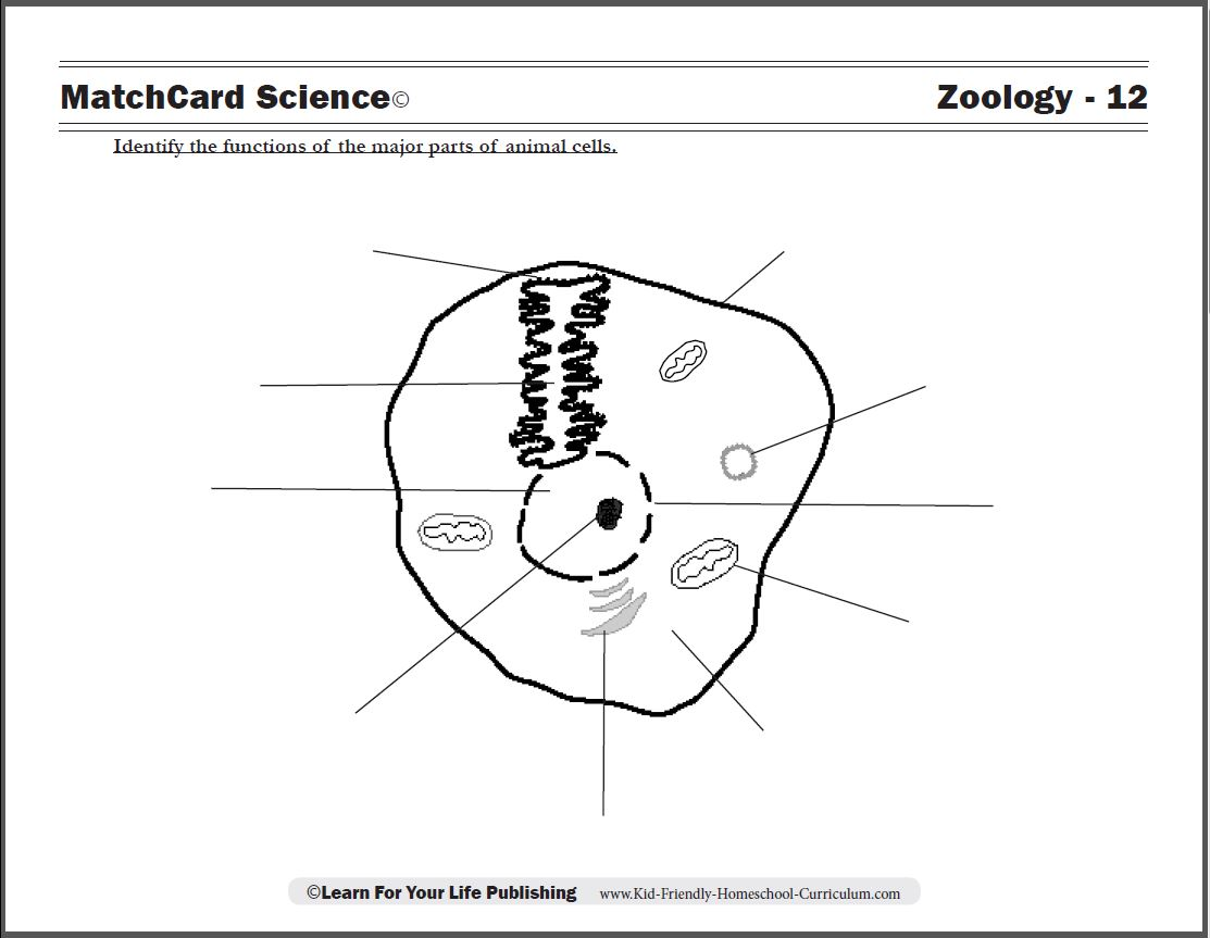Collection Of Animal Cells Worksheet