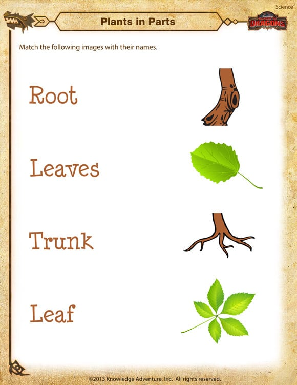 Collection Of Worksheet For Plants For Kindergarten