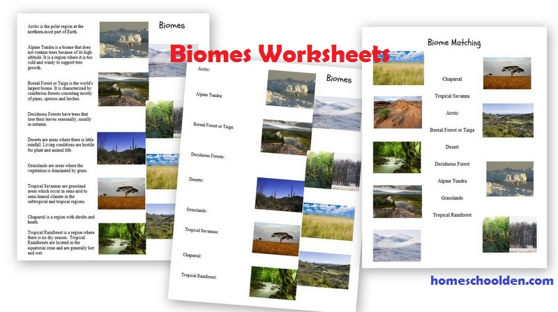Ecosystems Of The World Worksheets The Best Worksheets Image