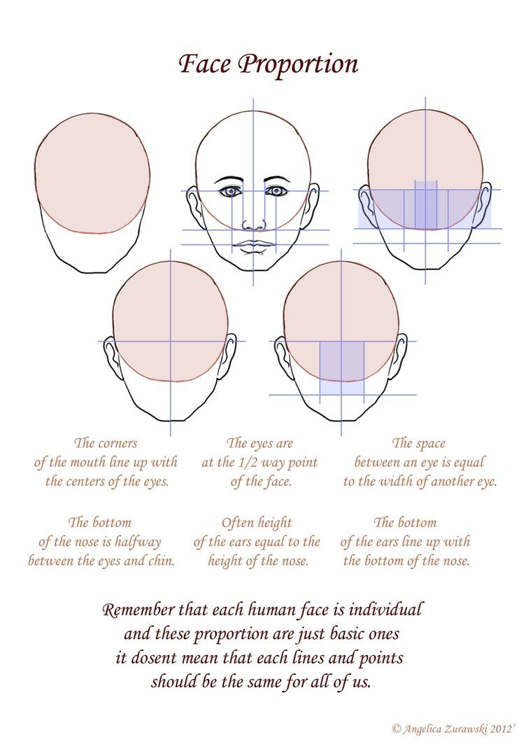Face Proportion Drawing At Getdrawings Com