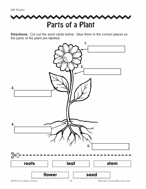 Kindergarten Worksheets On Parts Of A Plant 1308459
