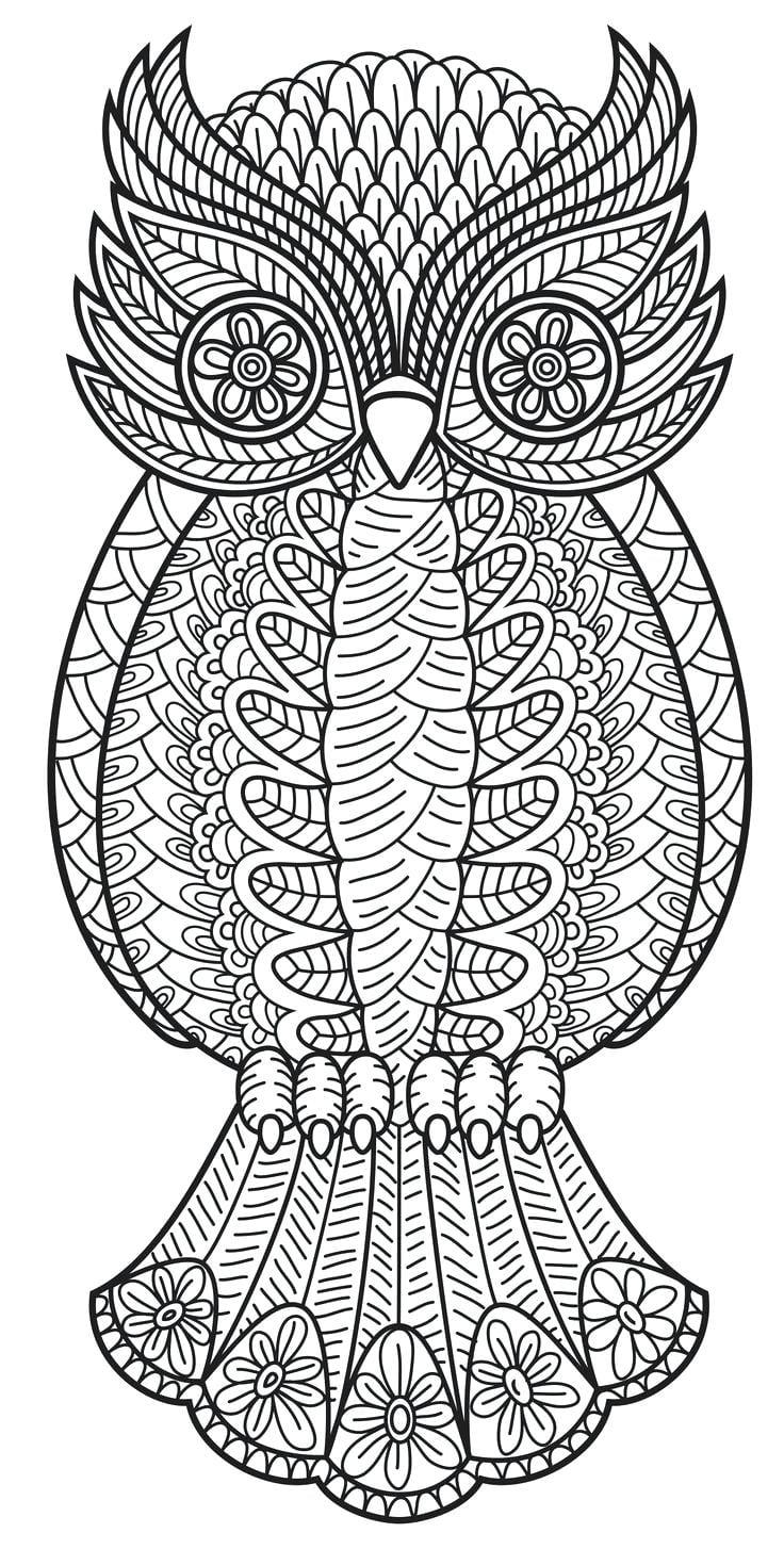 Owl Worksheets For Kindergarten The Best Worksheets Image