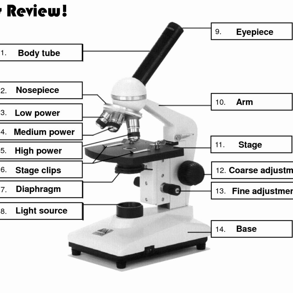 Parts Of A Microscope Worksheet Answers Resume Unbelievable