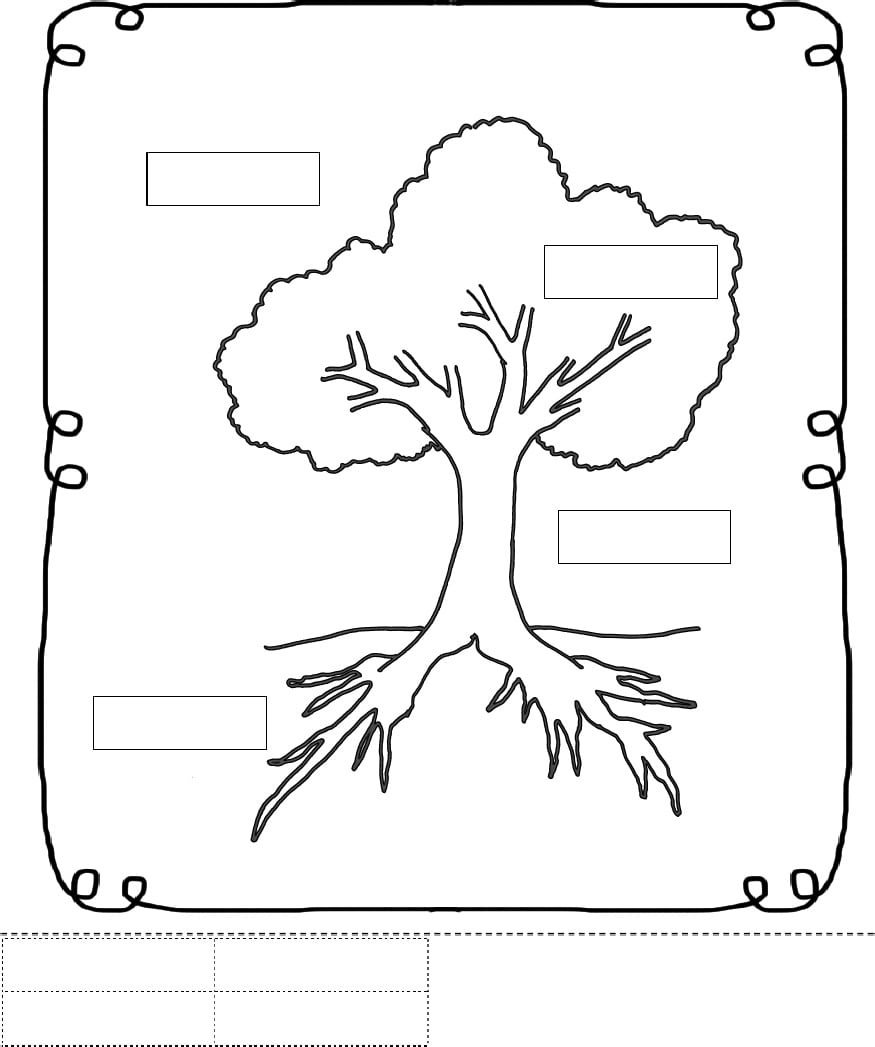 Parts Of A Tree Worksheet Trees School Theme Pinterest
