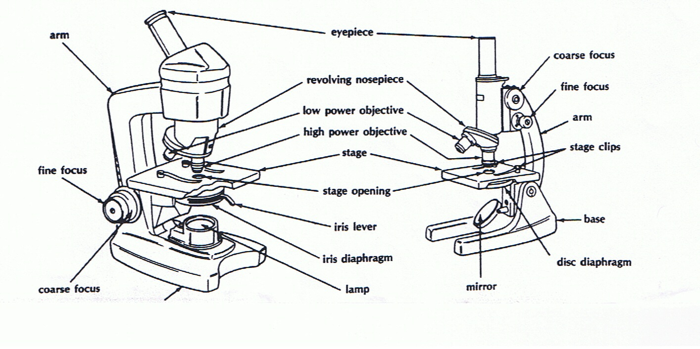 Parts Of The Microscope Worksheet The Best Worksheets Image