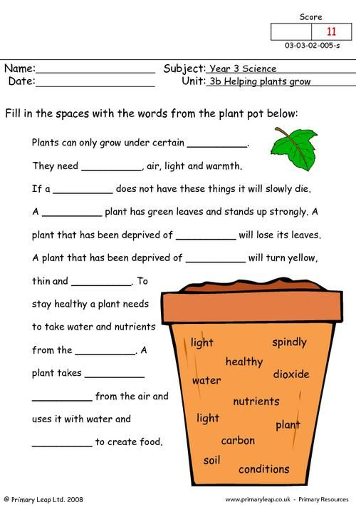 Photosynthesis Worksheets For 3rd Grade Images