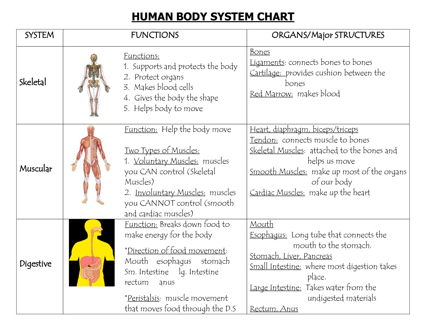 The Human Body An Orientation Worksheet Answers The Best