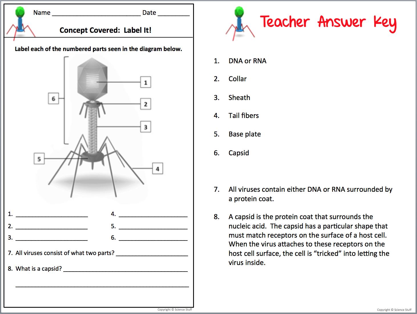 Virus Worksheet 641354