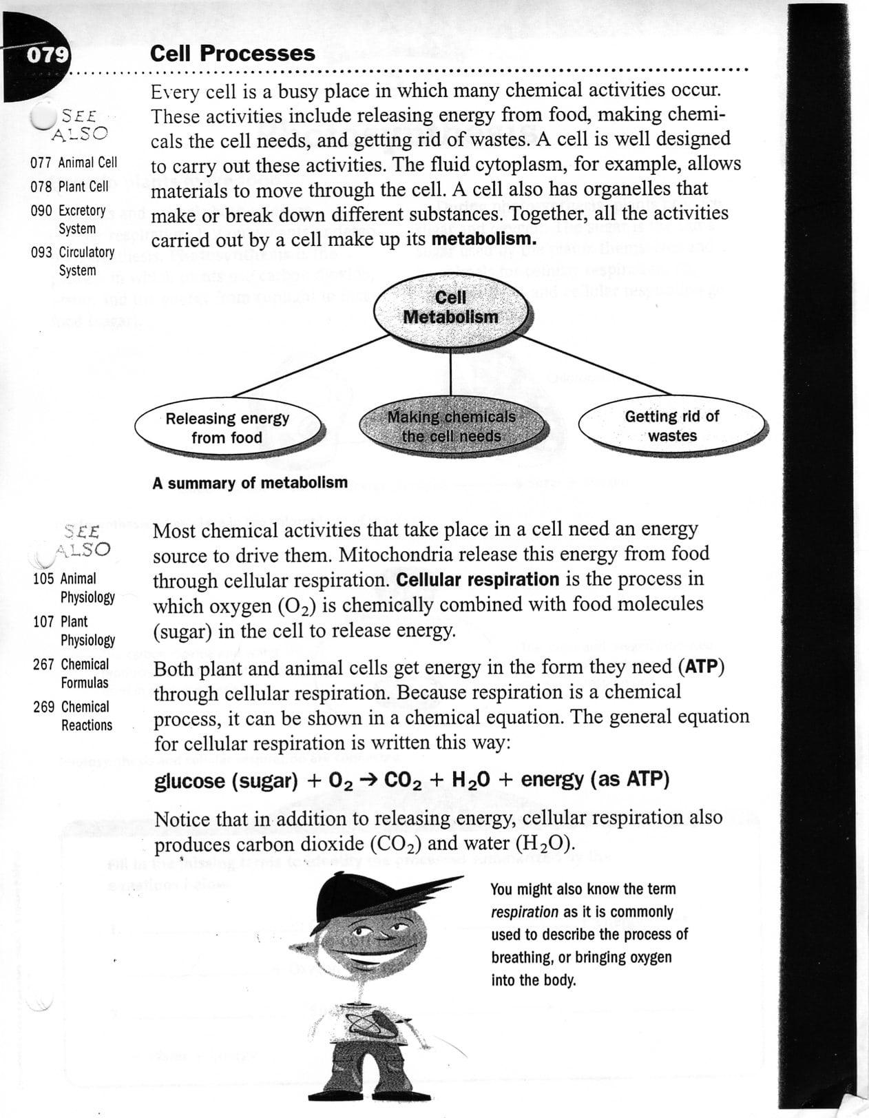 Worksheet  Cell Transport Worksheet  Mifirental Free Printables