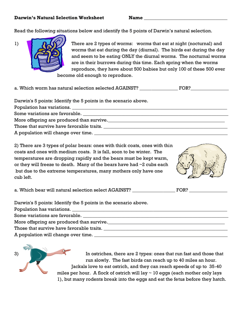 Types Of Natural Selection Worksheet
