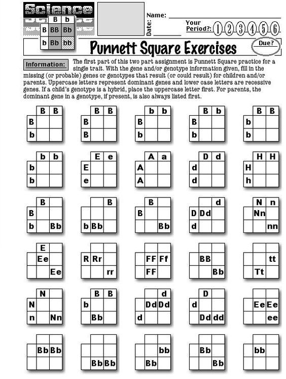 Worksheets About Punnett Squares