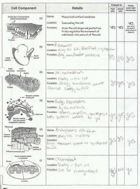 Printables  Cell Structure Worksheet  Lemonlilyfestival Worksheets