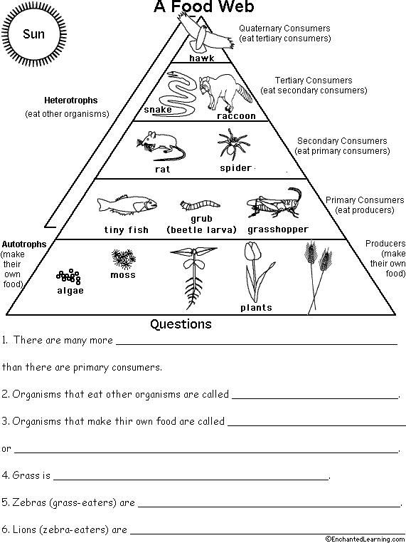 Ecological Pyramid Worksheet Food Pyramid, Food Chains And Cartoon