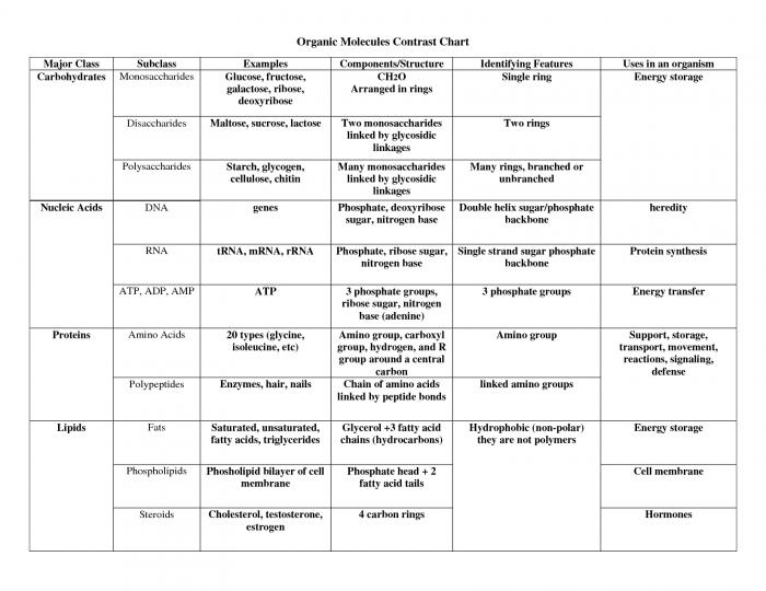 4 Types Of Macromolecules Chart