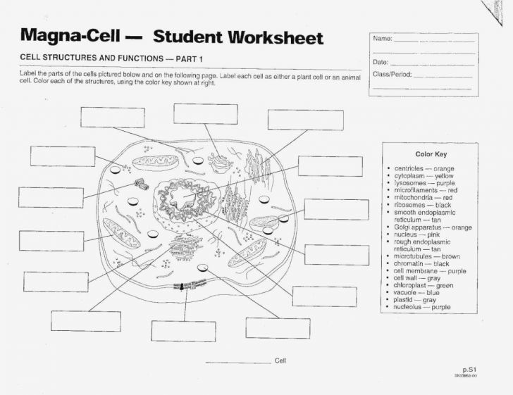 Label The Cell Worksheet