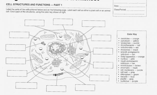 Animal And Plant Cell Labeling Worksheet – Label Plant Cell