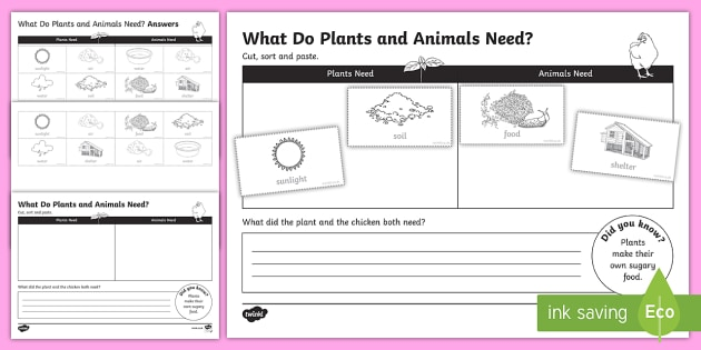 Plants And Animals Needs Worksheet   Worksheet