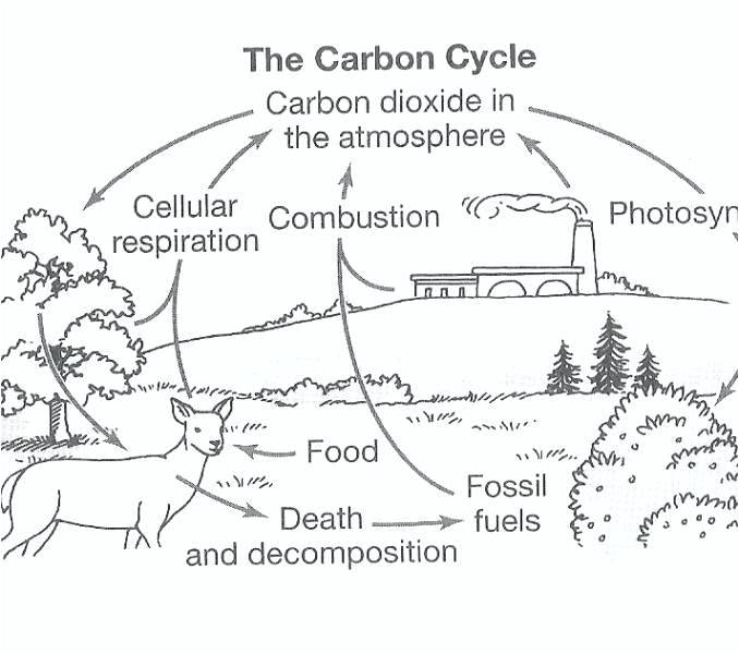 Carbon Cycle Worksheets Carbon Cycle Diagram Worksheet Answers