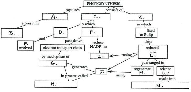 Cover Image Photosynthesis Diagram Worksheets Worksheet Grade 3