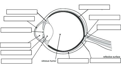 Label Eye Diagram Ks2
