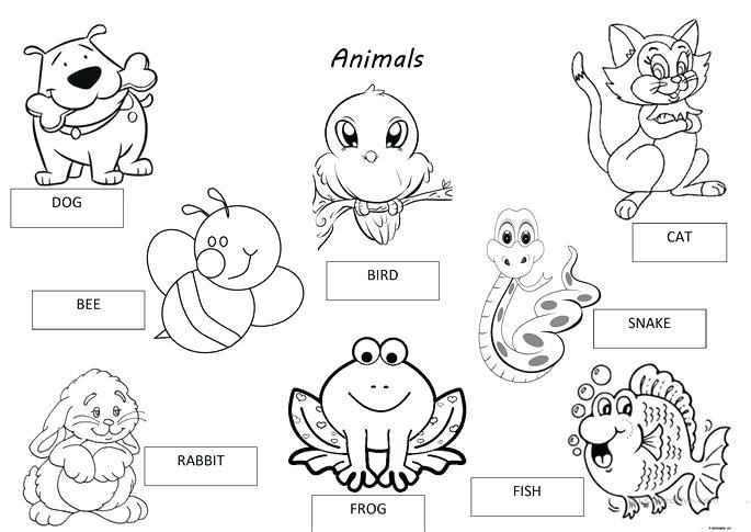 Animal Groups Worksheets Free Printable For Kindergarten Pet