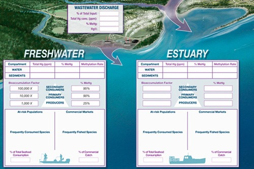 Mercury In Marine Ecosystems Poster