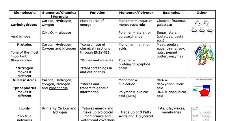 Macromolecules Chart Functions Examples Macro Pictures Basketball