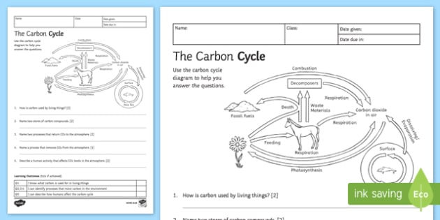 Carbon Cycle & Nitrogen Cycle