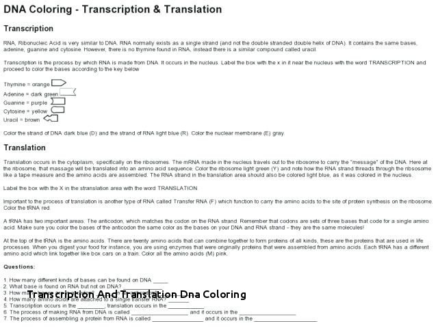 Transcription And Translation Dna Coloring Dna Rna Protein
