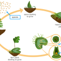 Fern Life Cycle Worksheets