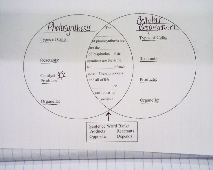 Photosynthesis And Cellular Respiration Venn Diagram Worksheet