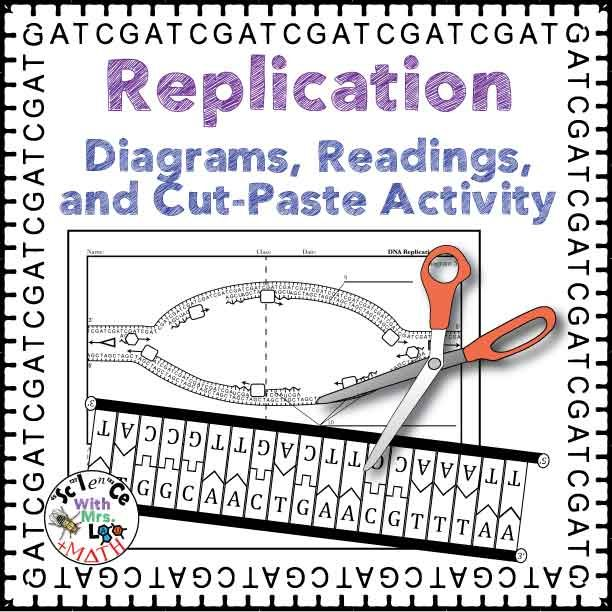 Dna Replication Activity, Diagram, And Reading For High School