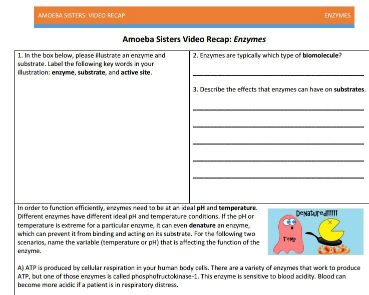 Enzyme Handout Made By Amoeba Sisters  Click To Visit The Website