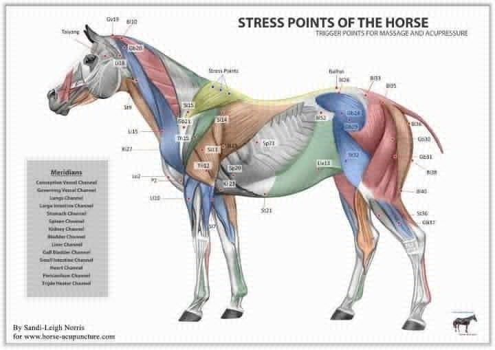 Stress Points Chart