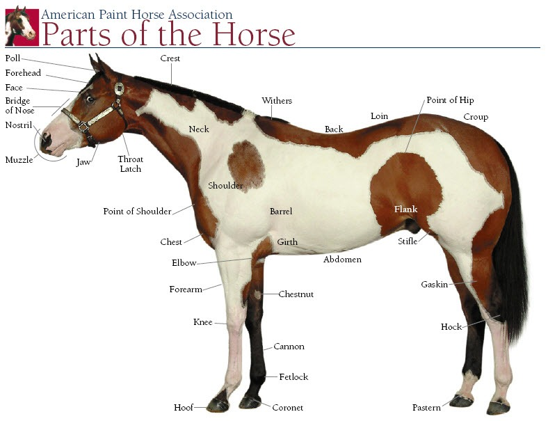 Horse's Body And Color