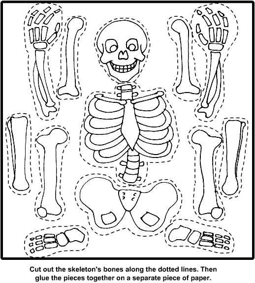Bones For Kids Worksheets