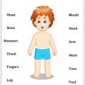 Body Worksheets Preschool