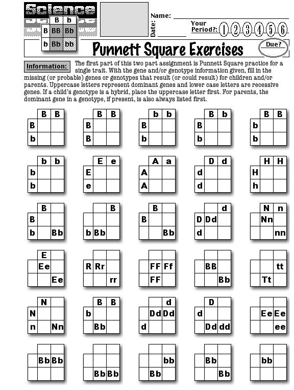 For Applied Biology Worksheets About Punnett Squares