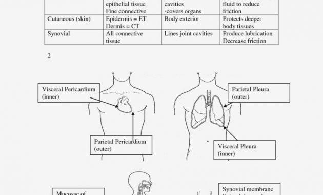 Skin Anatomy Diagram Worksheet Skin Diagram Anatomy – Skin