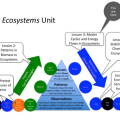 Ecosystem Cycles Worksheets