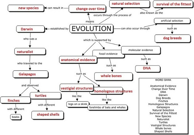 Theory Of Evolution  Theory Of Evolution Worksheet Answers