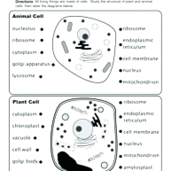 Label Animal Cell Worksheet Labeling An Animal Cell Worksheet