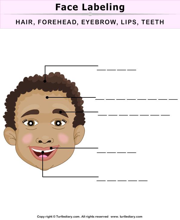 Label Face Parts Worksheet